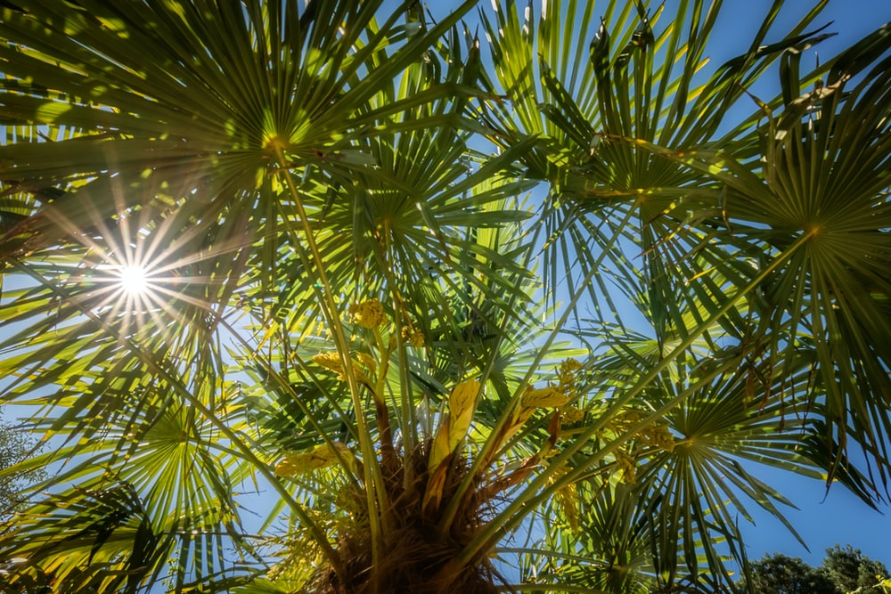 green palm tree during daytime