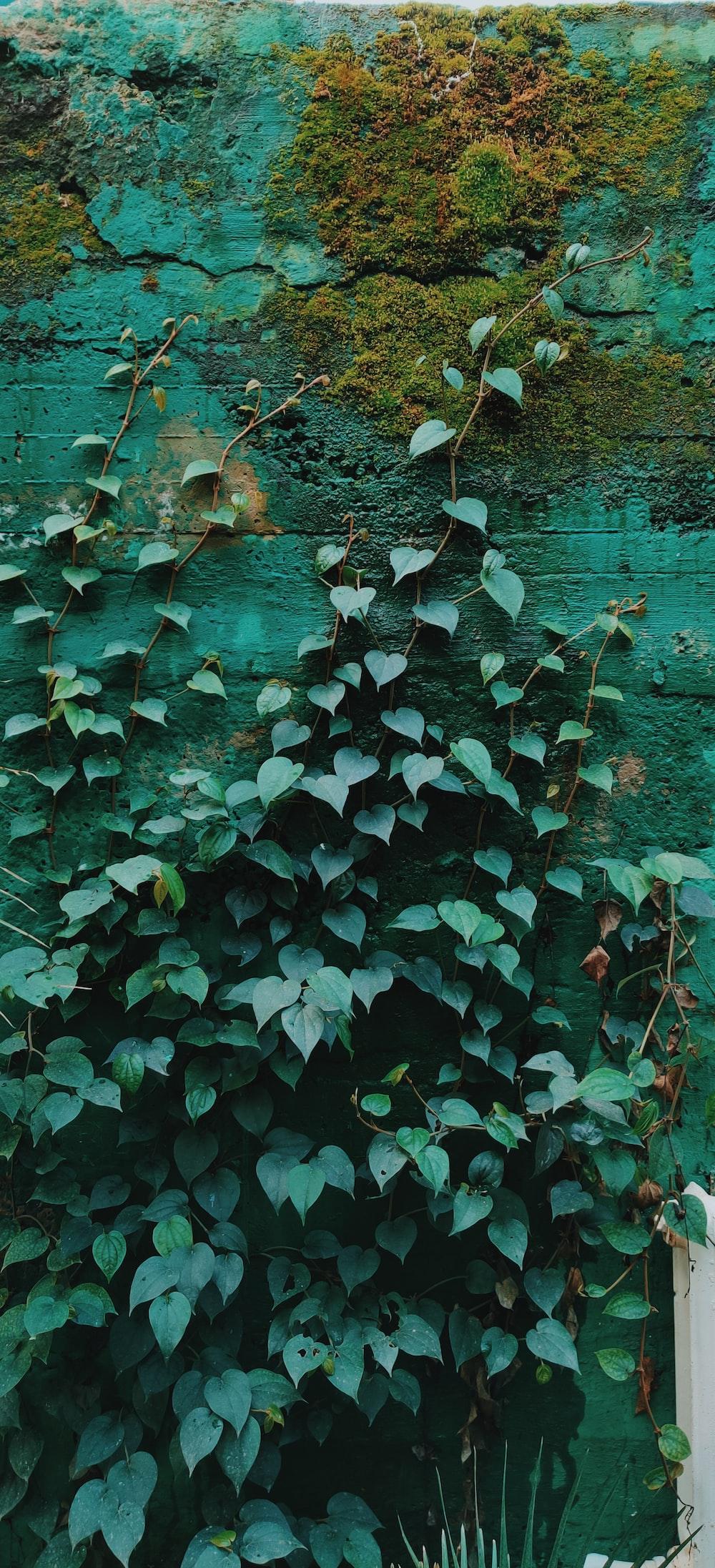 green leaves on brown wooden floor