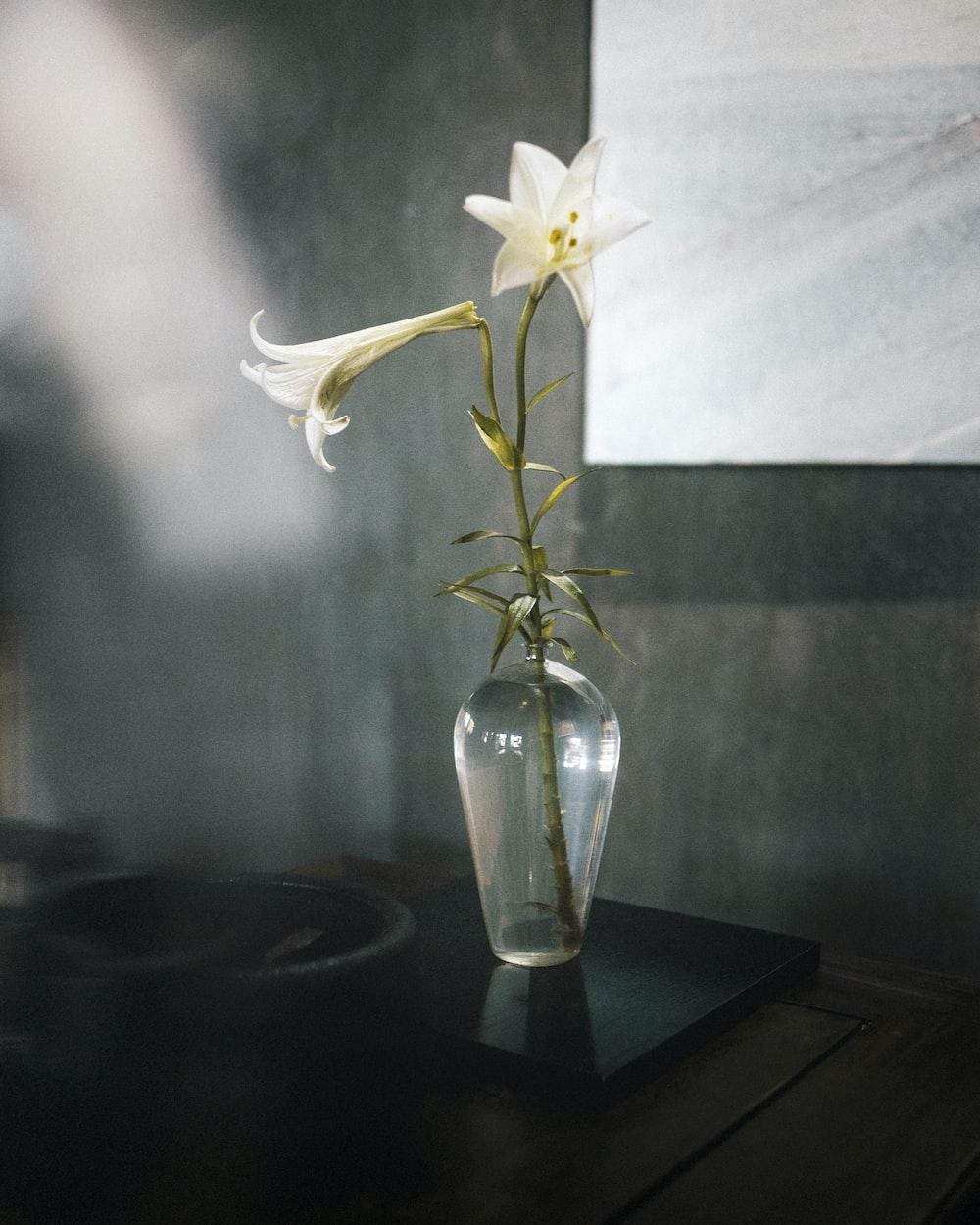 white flower in clear glass vase