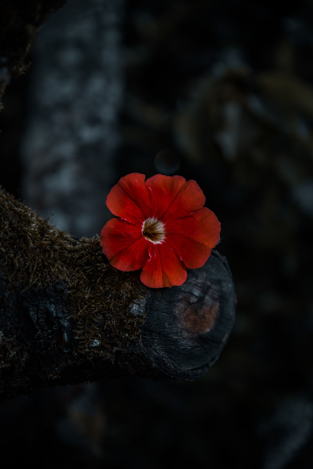 red flower on brown tree trunk