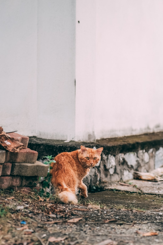 orange tabby cat on gray concrete brick