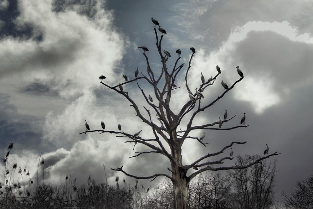 birds on bare tree under cloudy sky during daytime
