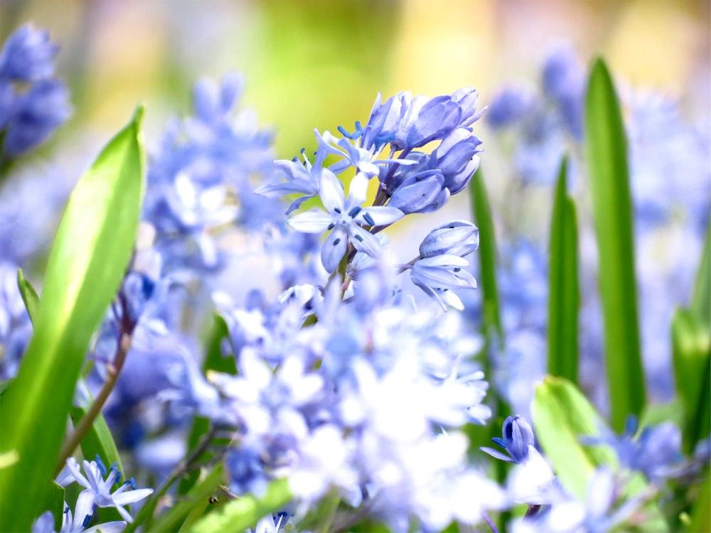 blue and white flowers in tilt shift lens