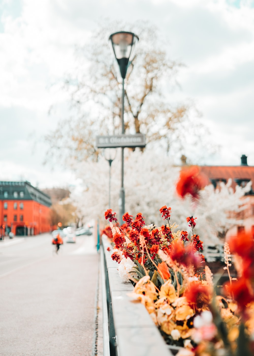 red and white flowers on street during daytime