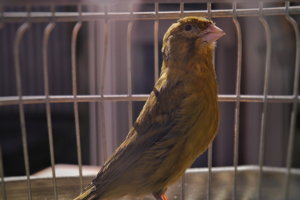 brown bird in white cage
