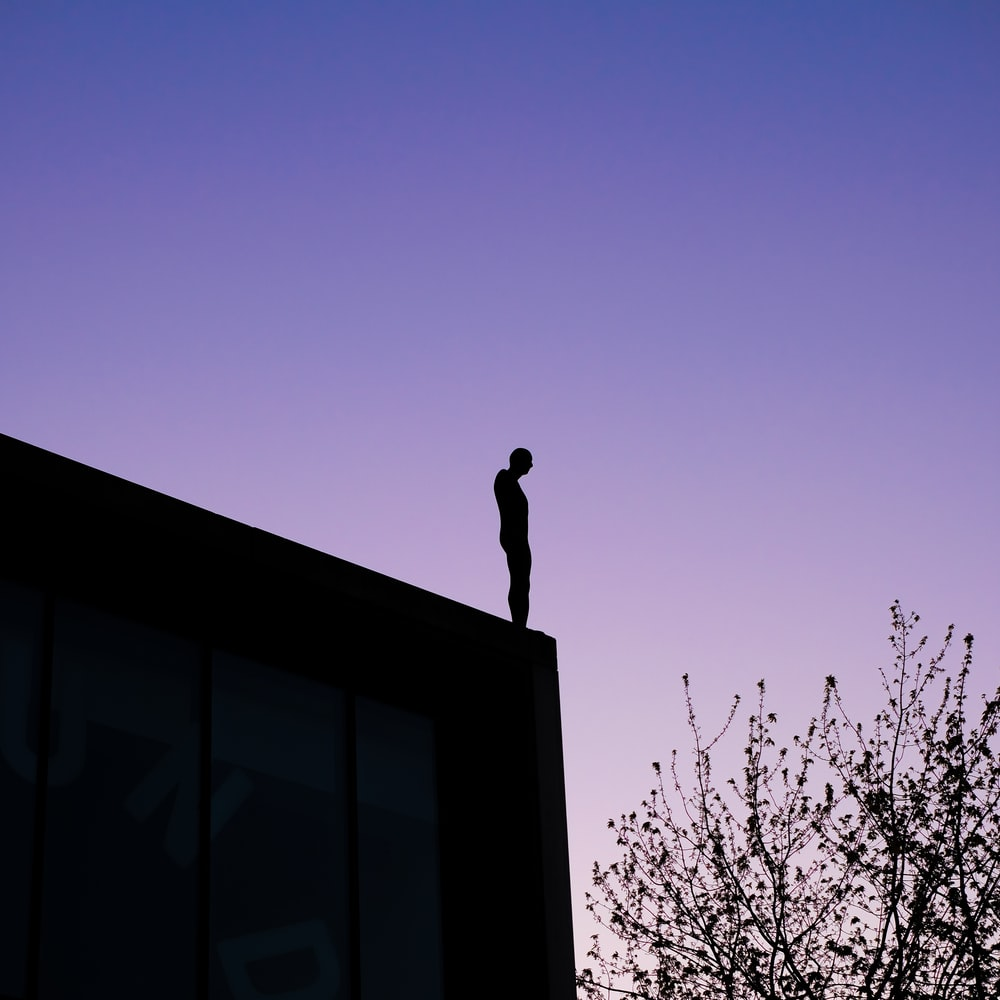 silhouette of bird on top of building during sunset