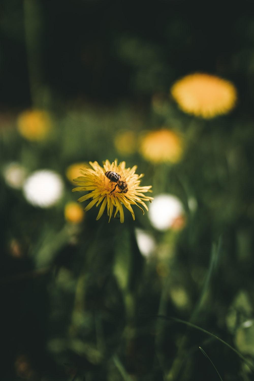 yellow and white flower in tilt shift lens