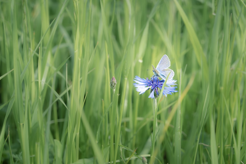 purple flower in the middle of green grass field