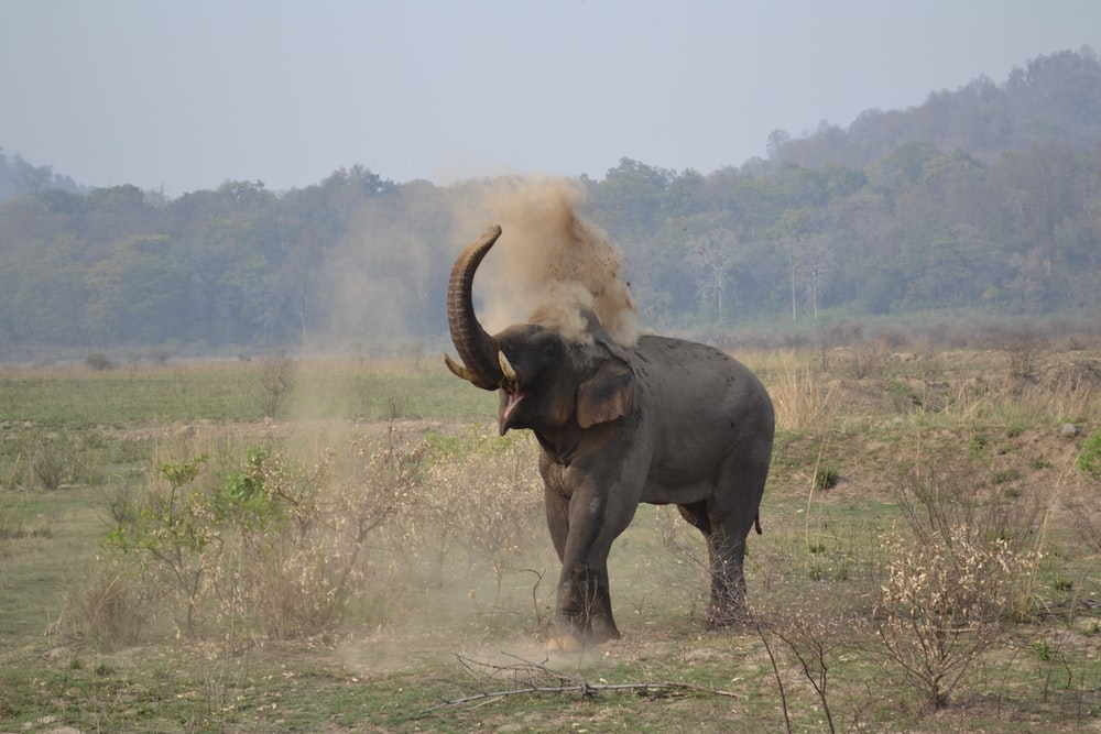 black elephant on green grass field during daytime