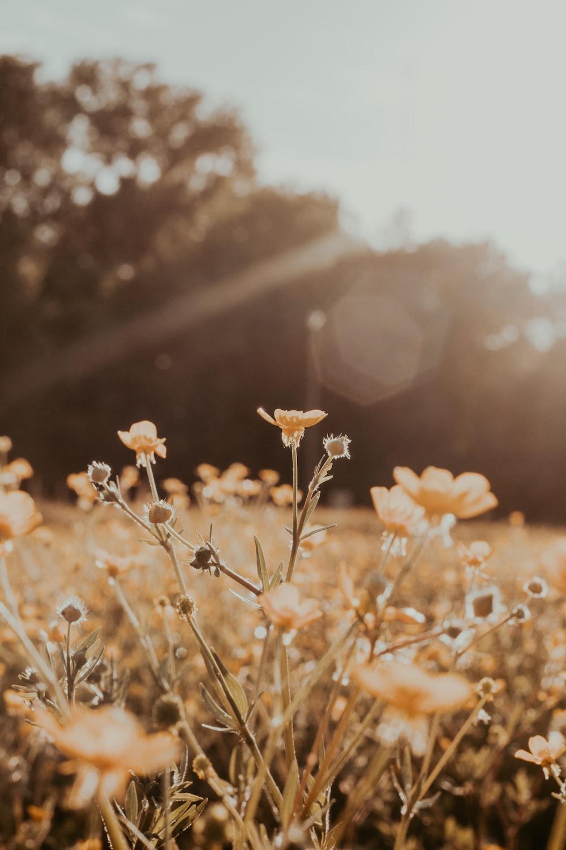 brown flower field during daytime