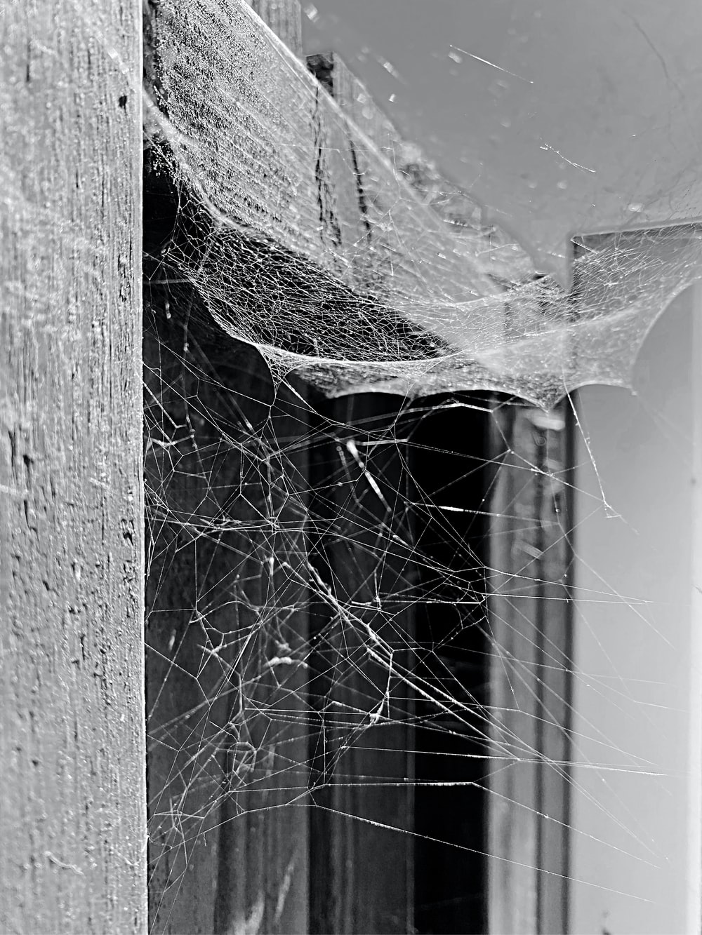 grayscale photo of spider web