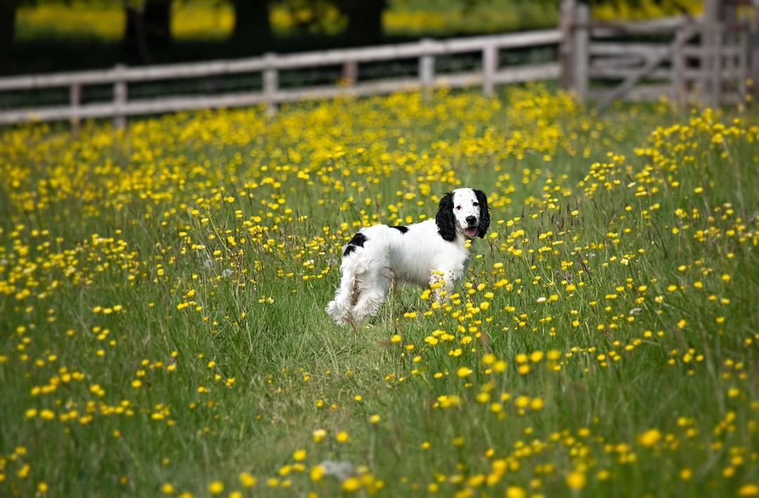 Pup photos again