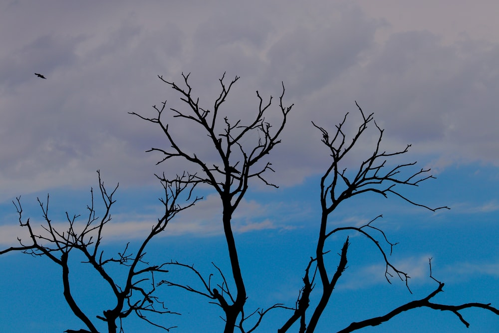 leafless tree under cloudy sky