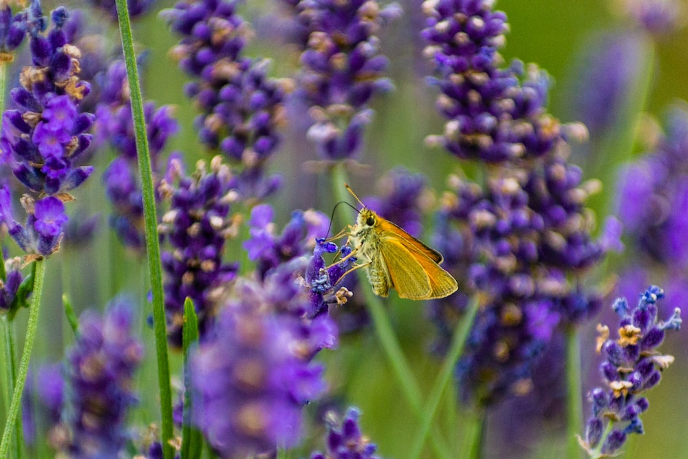 yellow butterfly perched on purple flower in close up photography during daytime