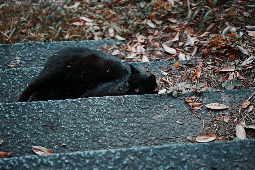 black cat lying on gray concrete floor