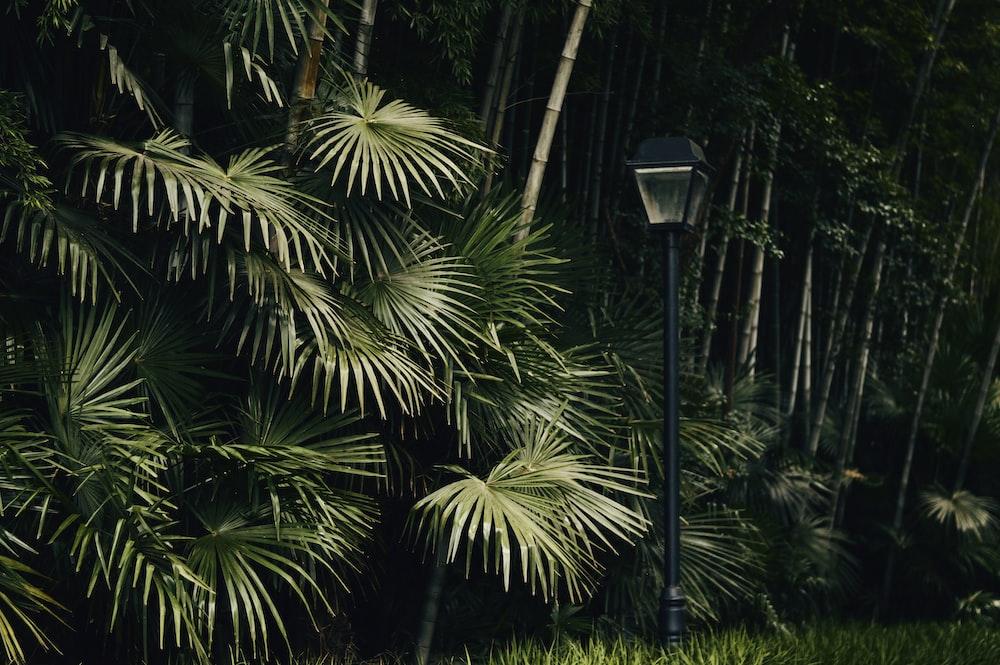black street lamp near green palm tree during night time