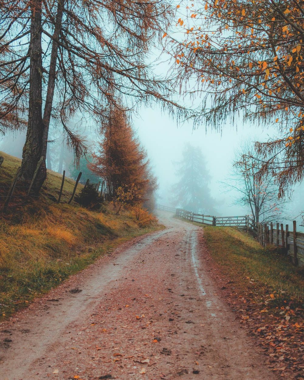 brown dirt road between trees during daytime