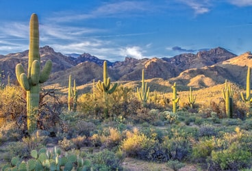 Masters of Desert Survival, Can Saguaros Survive Wildfires?