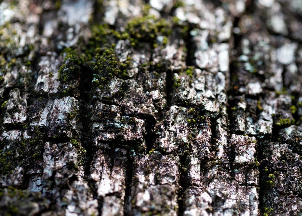 black and gray tree trunk