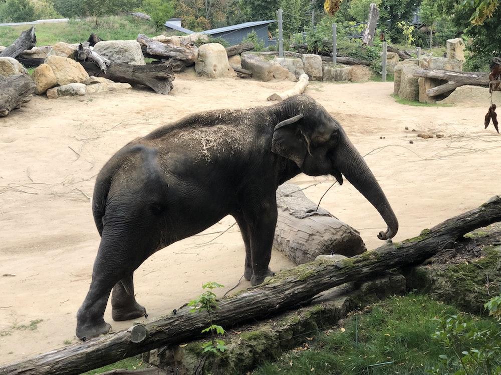black elephant walking on brown dirt during daytime