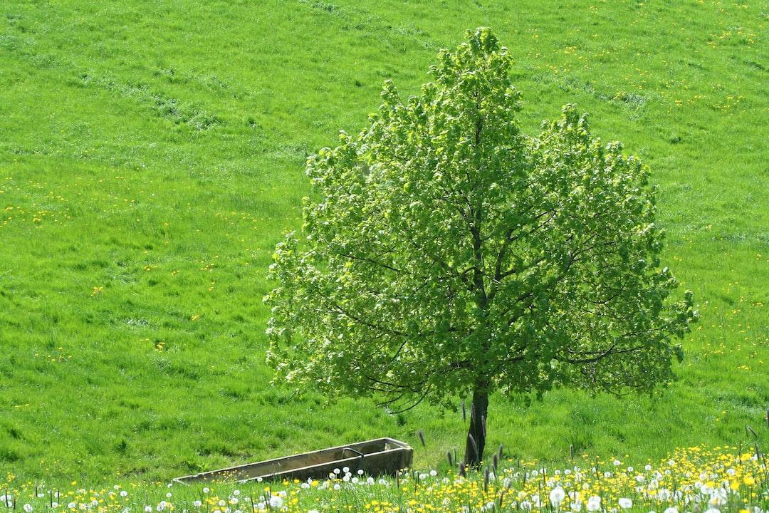 Flowering tree and meadow near Eischen (AI)