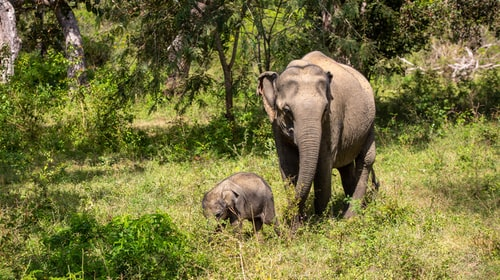How To explore 5 types of animals in Yala