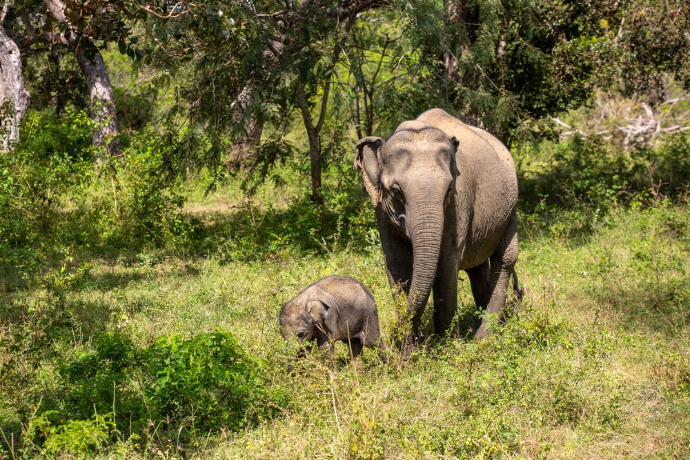 elephant walking on green grass field during daytime