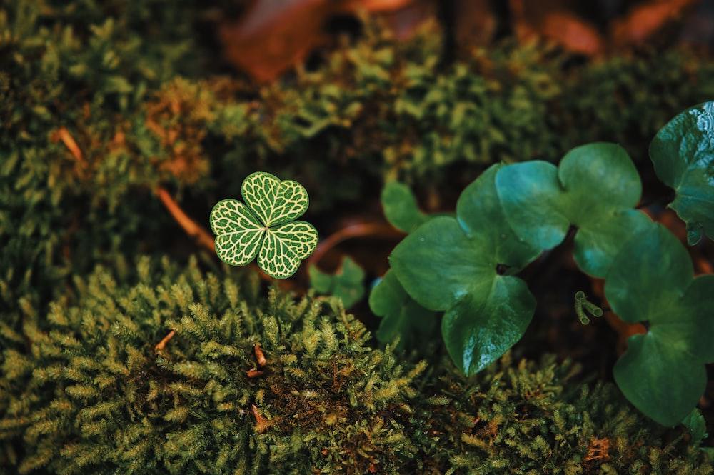 green plant in macro lens