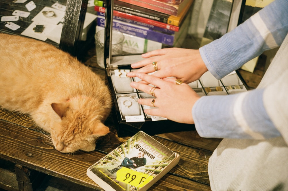 person holding a book and orange tabby cat on a table