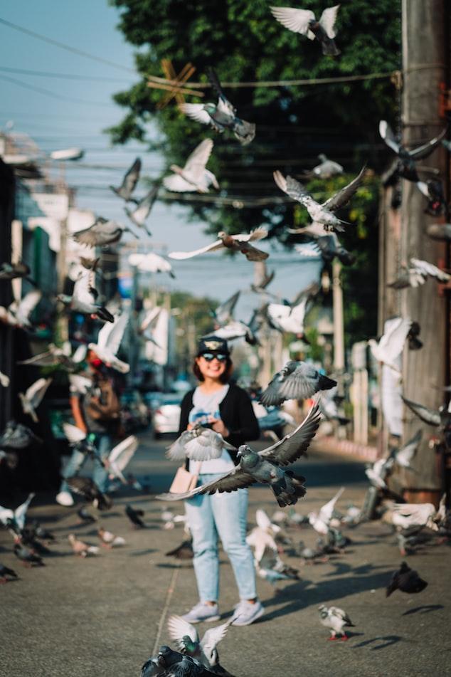 Birds flying around a lady