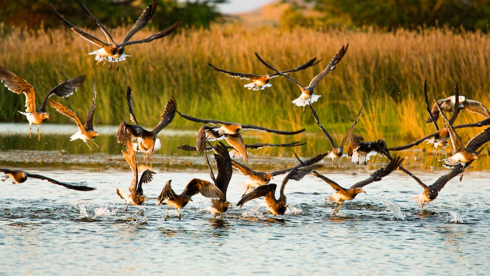 flock of birds flying over the lake during daytime