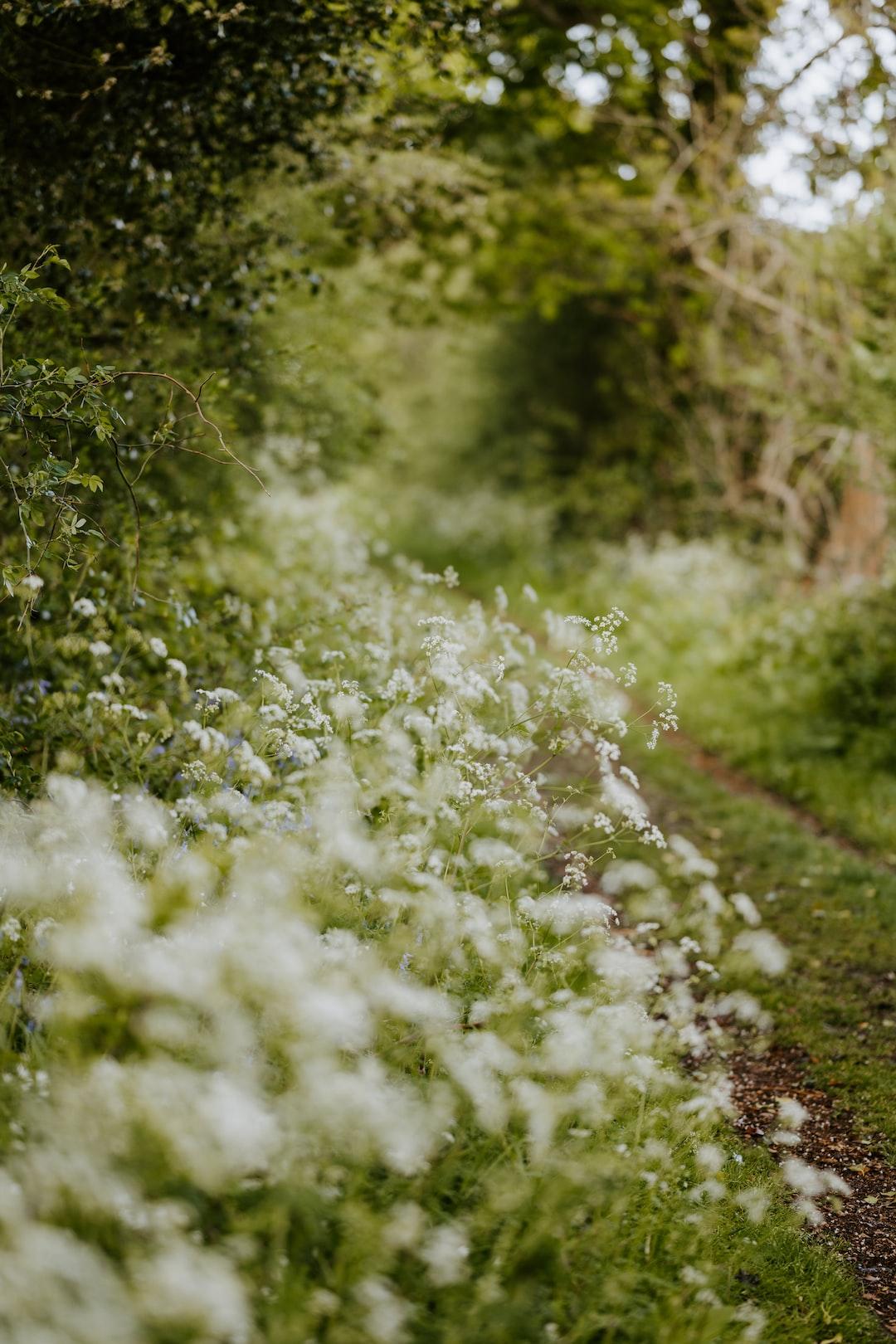 Rural countryside wildflowers