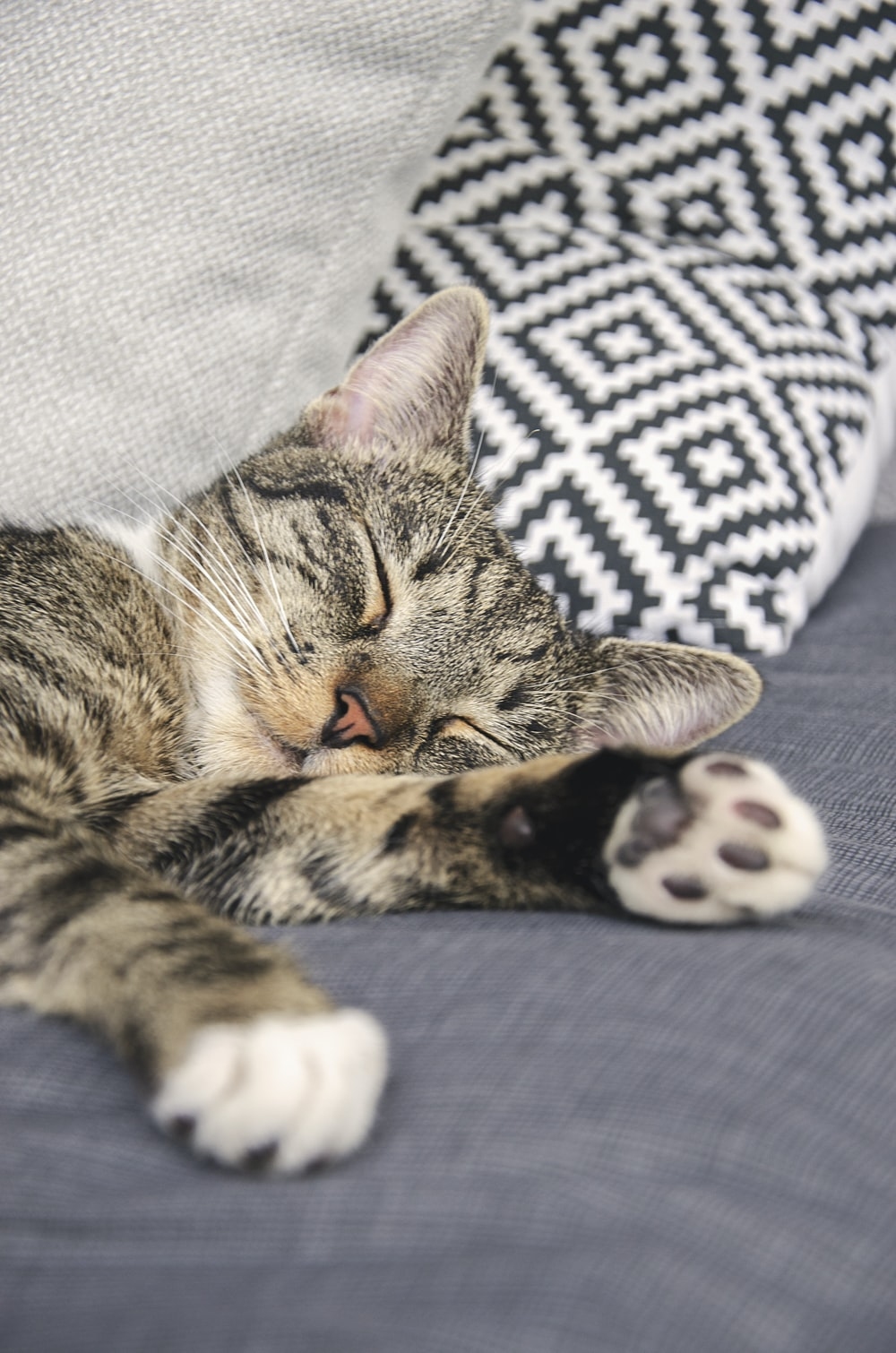 brown tabby cat lying on white and black textile