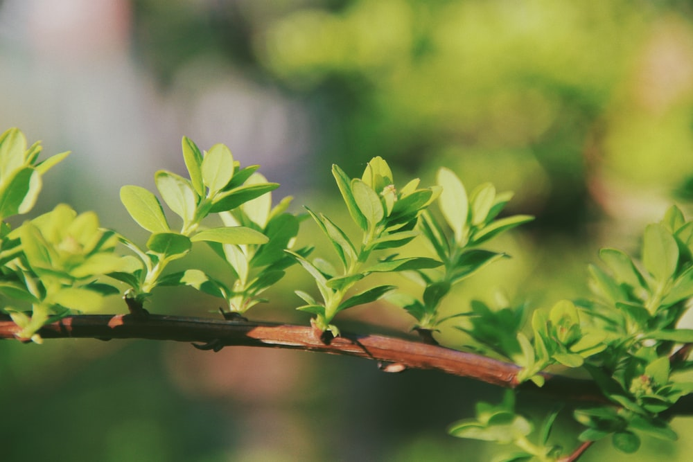 green leaves on brown branch