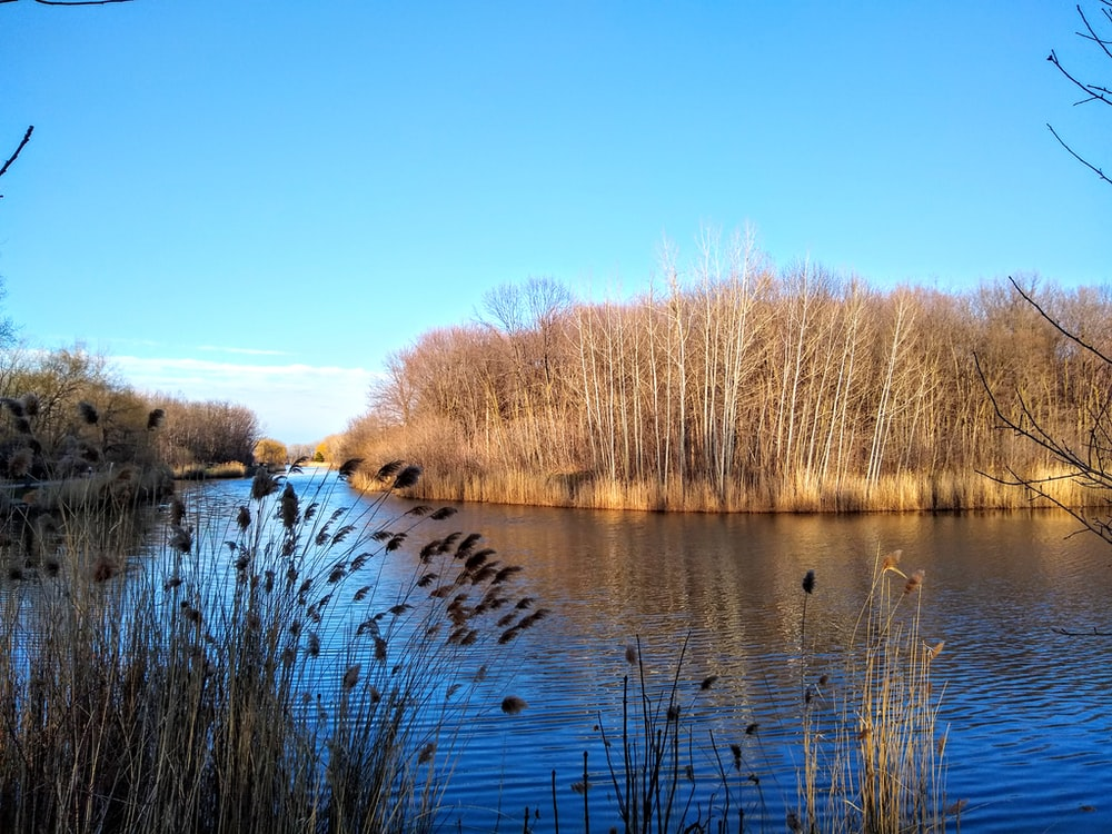 brown trees beside river under blue sky during daytime