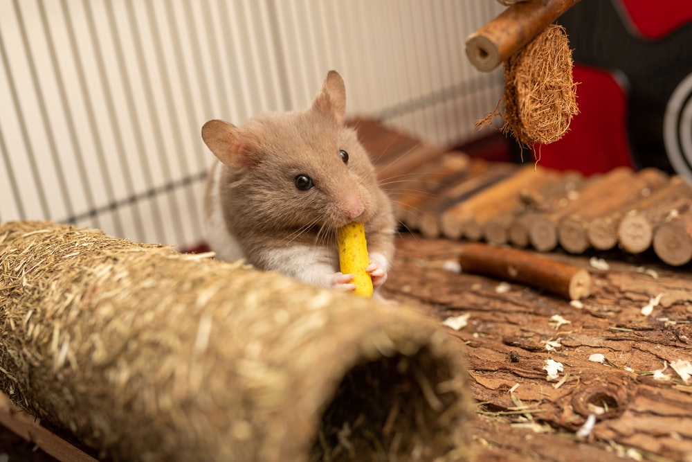 brown mouse on brown wooden table