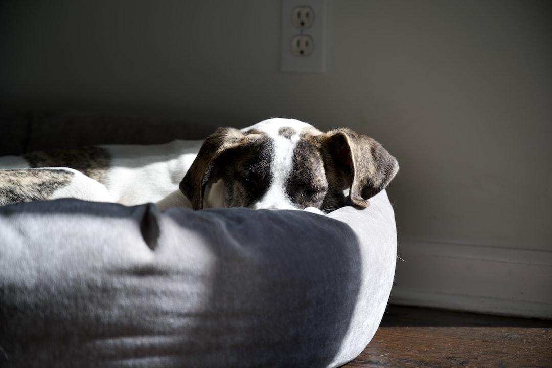 Sleepy dog, rescue, mutt, crossbreed