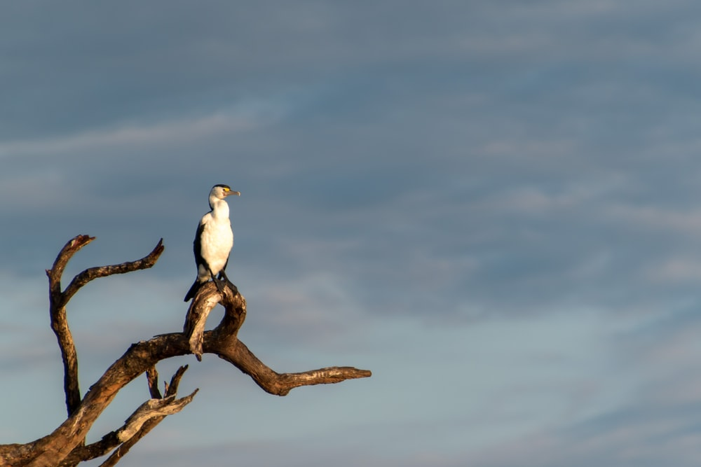 white and brown bird on brown tree branch during daytime