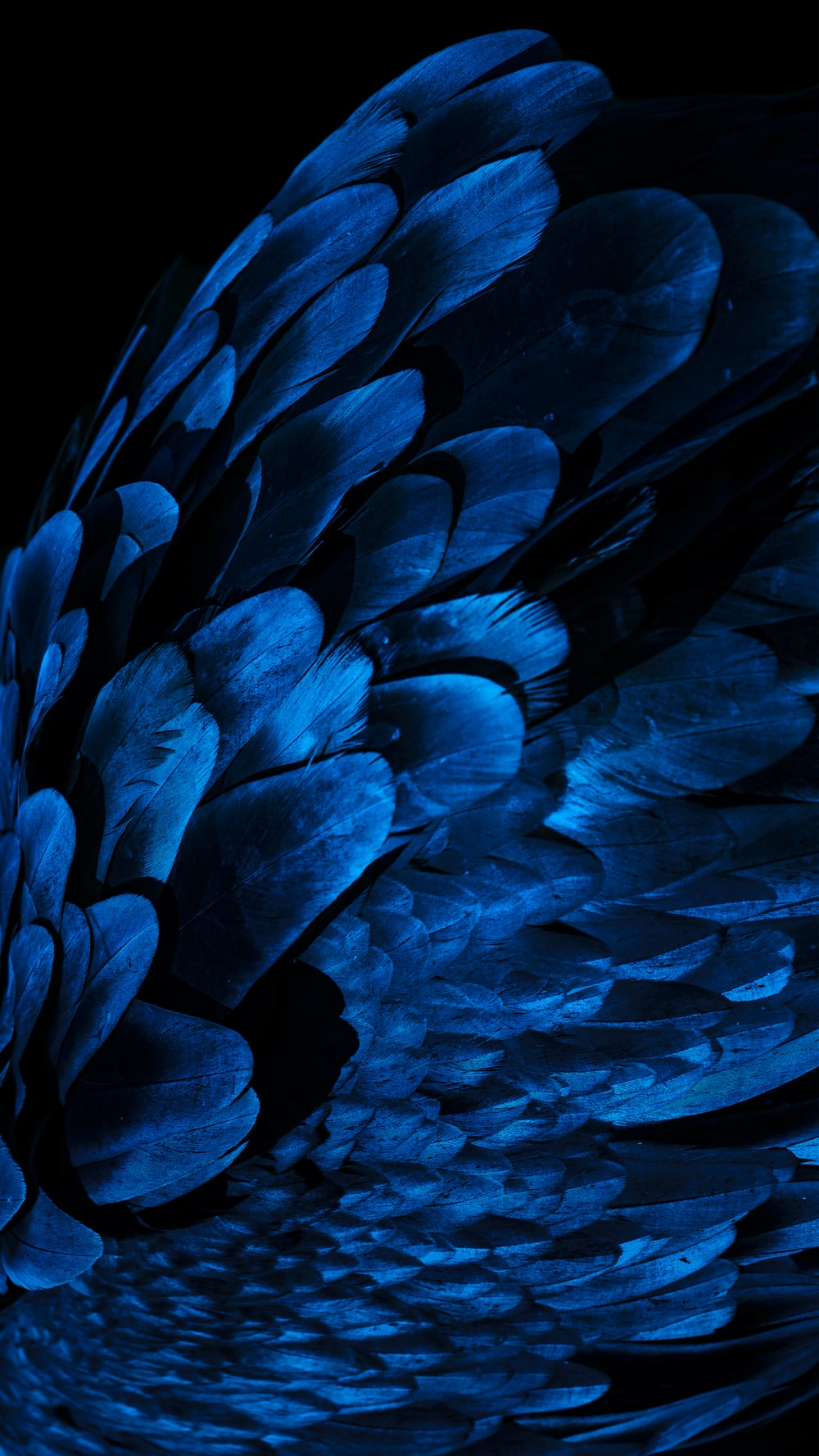 Blue Feather Pictures Download Free Images On Unsplash