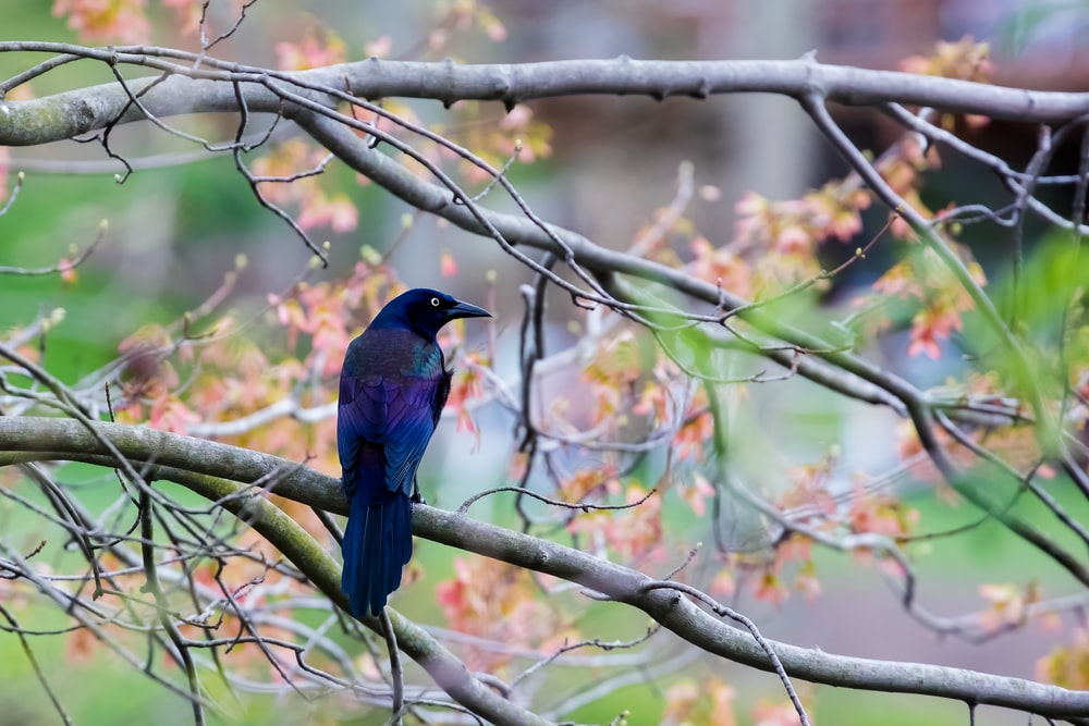 blue and black bird on brown tree branch during daytime