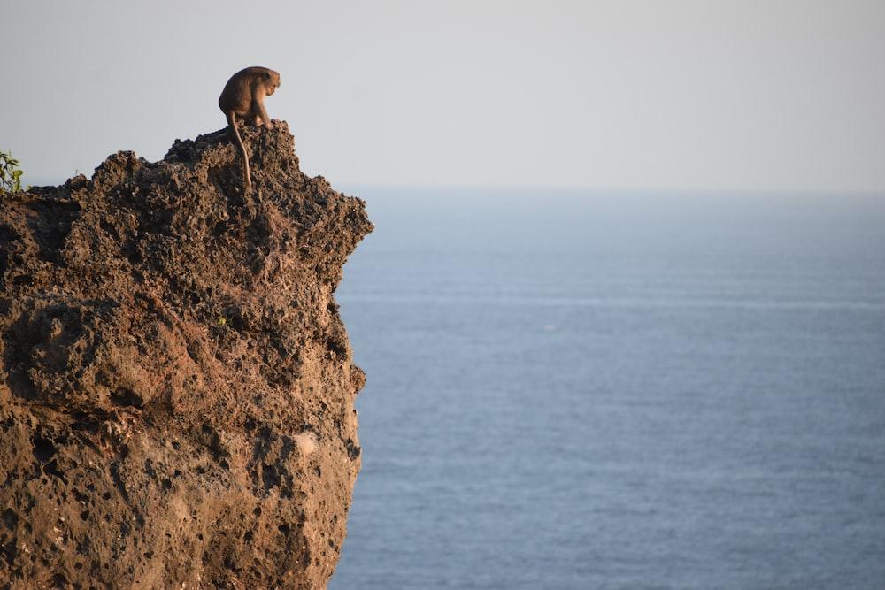 brown bird on brown rock formation during daytime