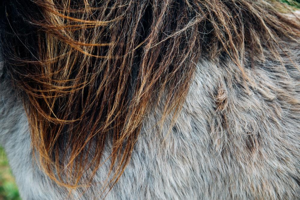 brown hair on white fur textile