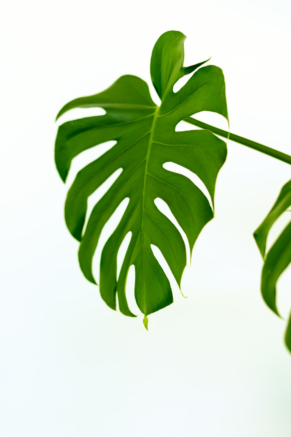 900 Leaf Background Images Download Hd Backgrounds On Unsplash They can be used as wallpaper for your desktop, a screensaver for your mobile phone, a template for congratulations. 900 leaf background images download