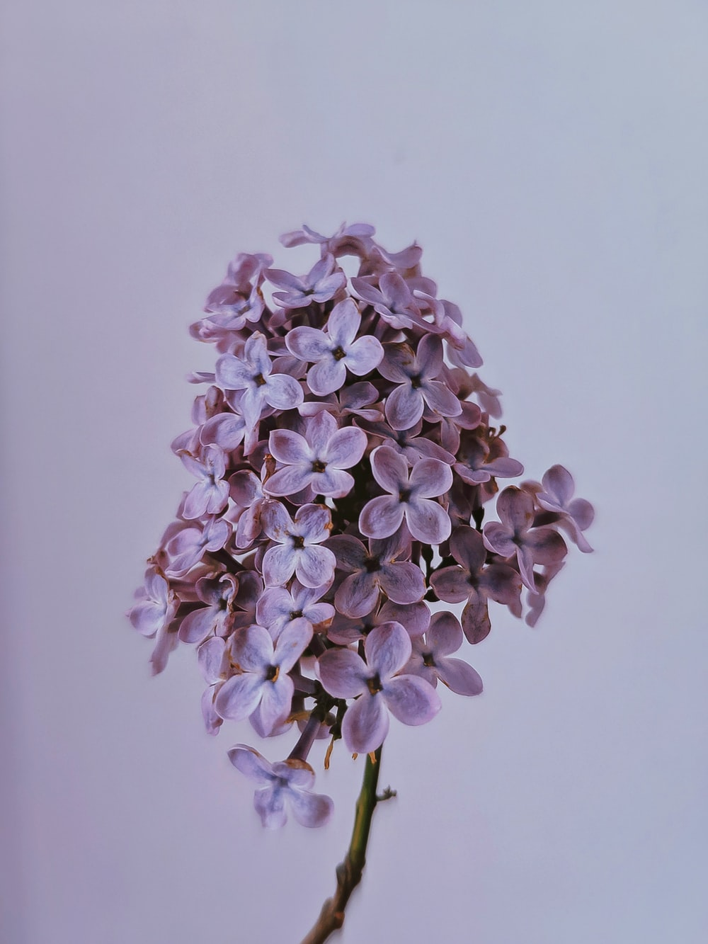 purple and white flower in close up photography