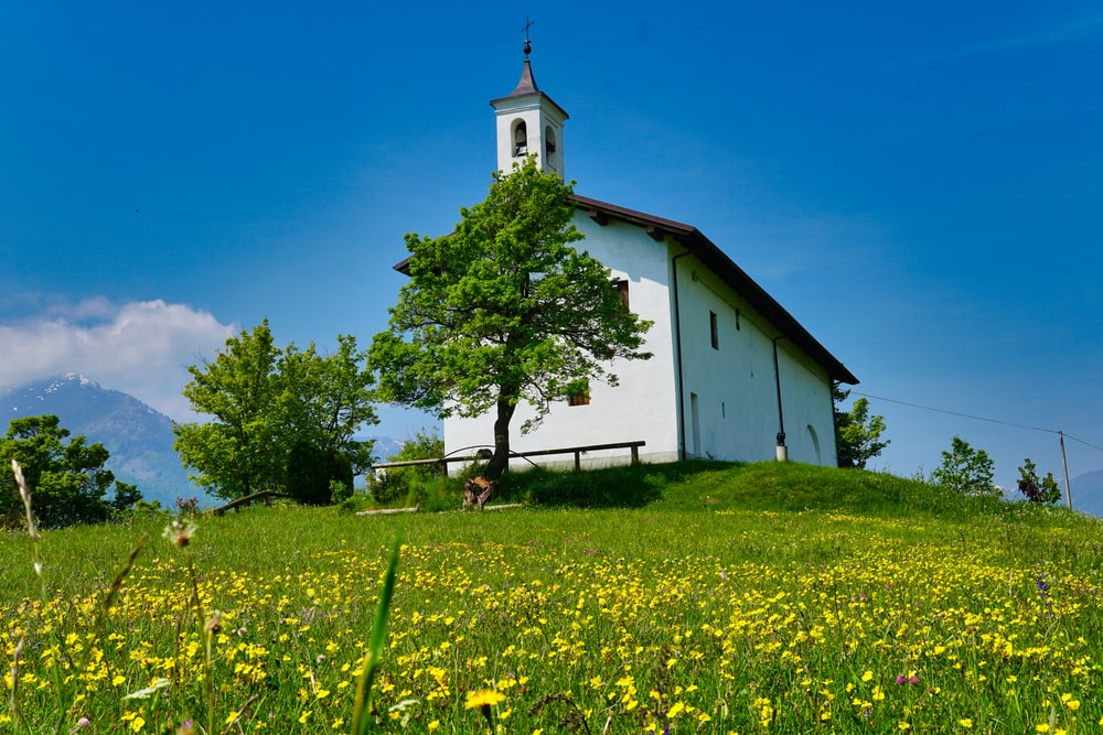 white and brown church near green tree under blue sky during daytime