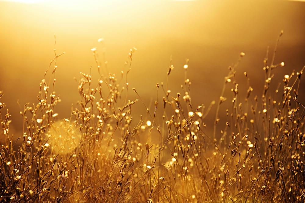 brown grass field during sunset