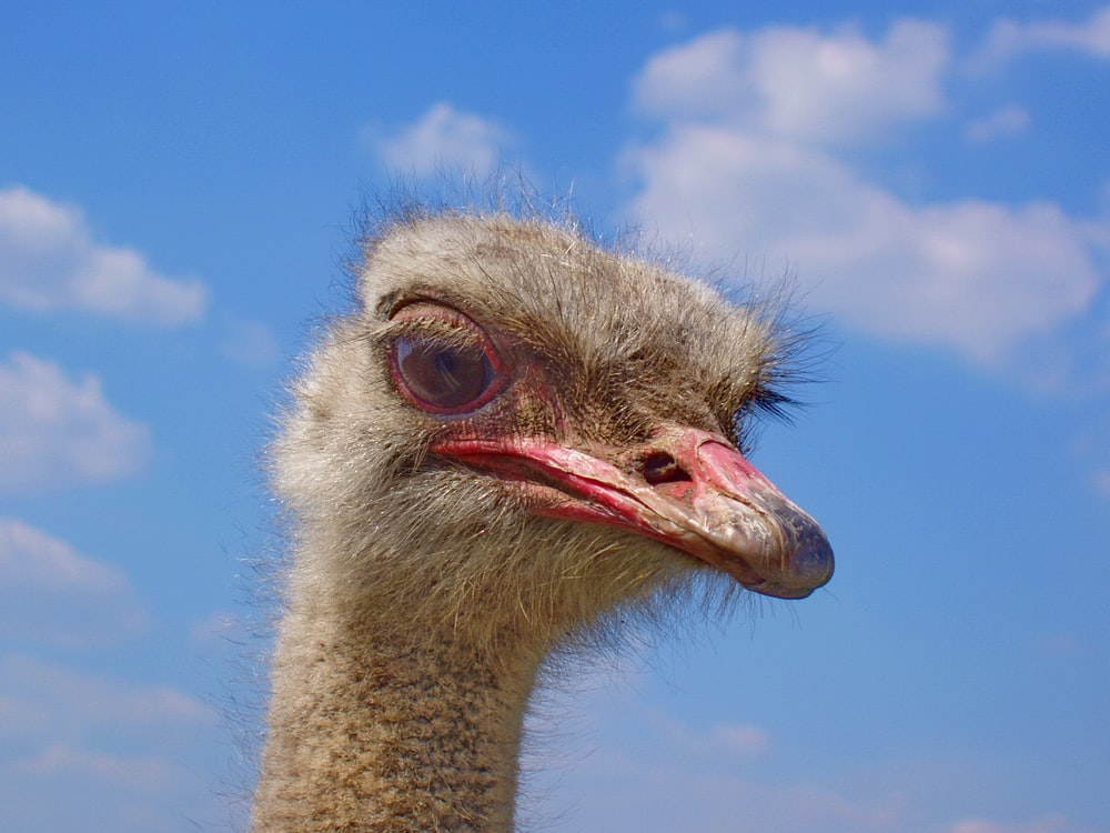 ostrich head under blue sky during daytime