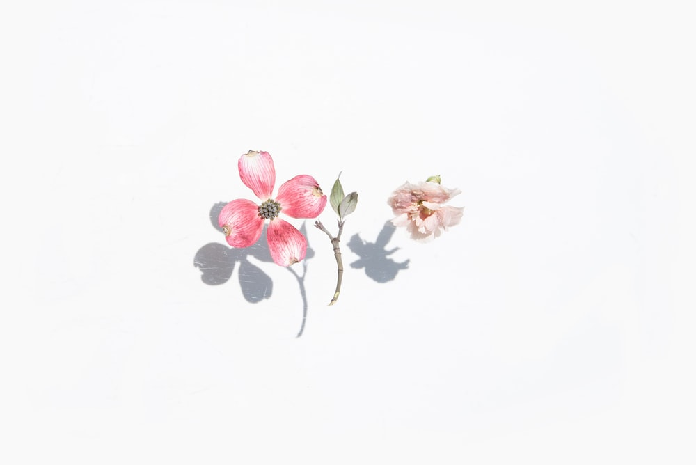 pink and green floral illustration