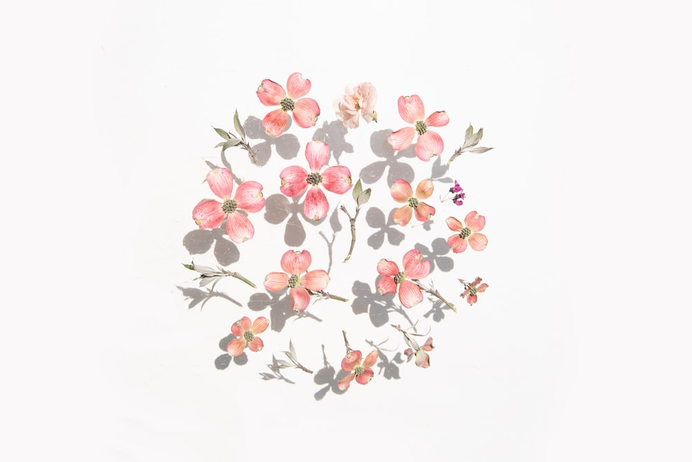 red and white flowers on white background