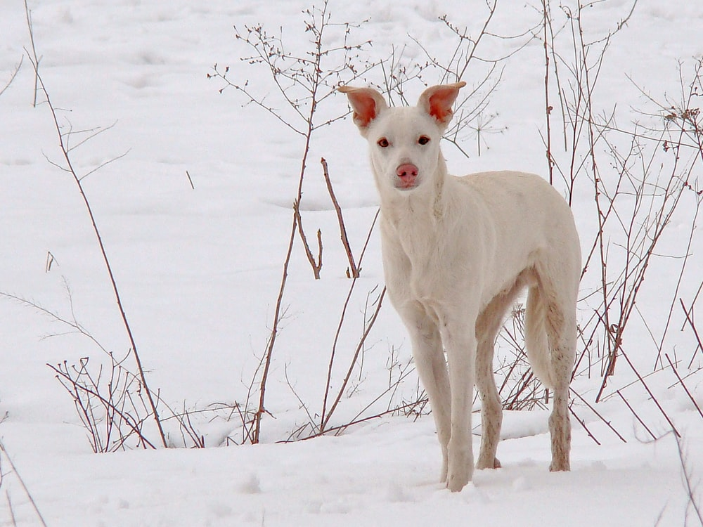 white short coat medium dog on snow covered ground during daytime